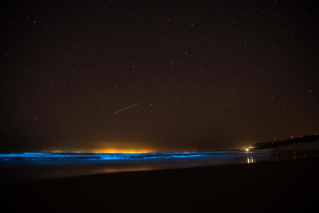 Visão noturna do efeito dos planctons no mar de Jeffrey´s Bay